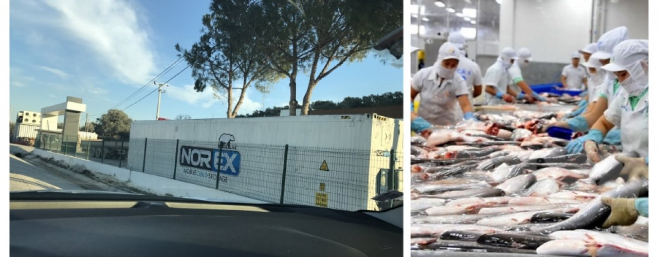 Bodrum Güllük de faaliyet gösteren Balık Üreticisi müşterimize  1x40 hc Norex  reefer soğutuculu konteyner kiralama