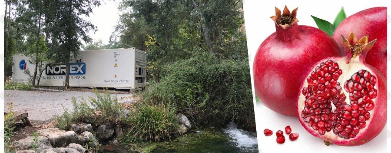 Nar Suyu Üreticisi Müşterimiz Uzun Dönem Norex Mobil Soğuk Hava Depomuzu Kiraladı