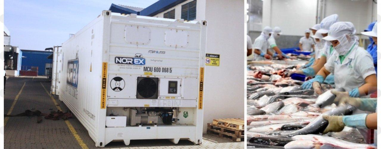 Akdeniz Bölgesinde Üretim Yapan Balık İşleme Tesisi Soğuk Hava Depo İhtiyacını Norex ile Çözdü